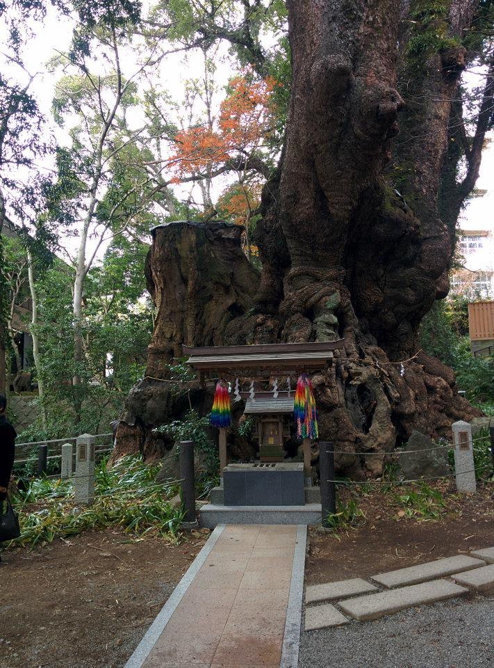 Pohon yang disucikan